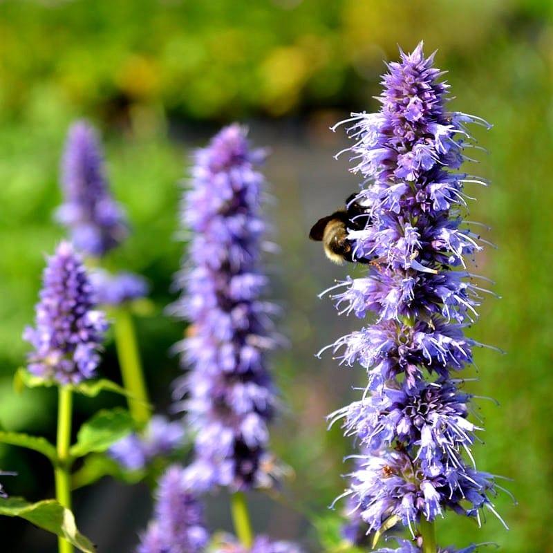 Comment faire pousser des plantes aromatiques ?