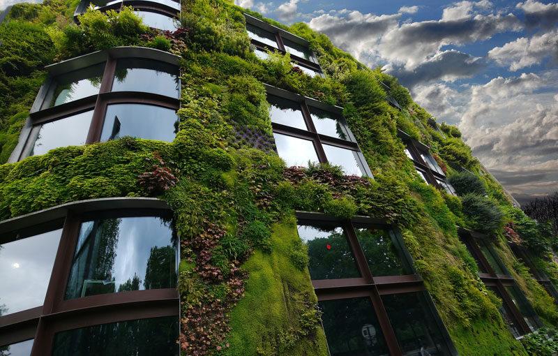 Découvrez tous les avantages du mur végétalisé