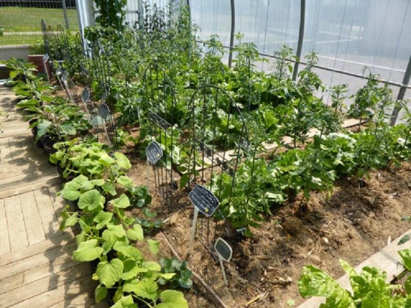 Jardin que planter et semer en mars le jardineur for Jardin que planter en novembre