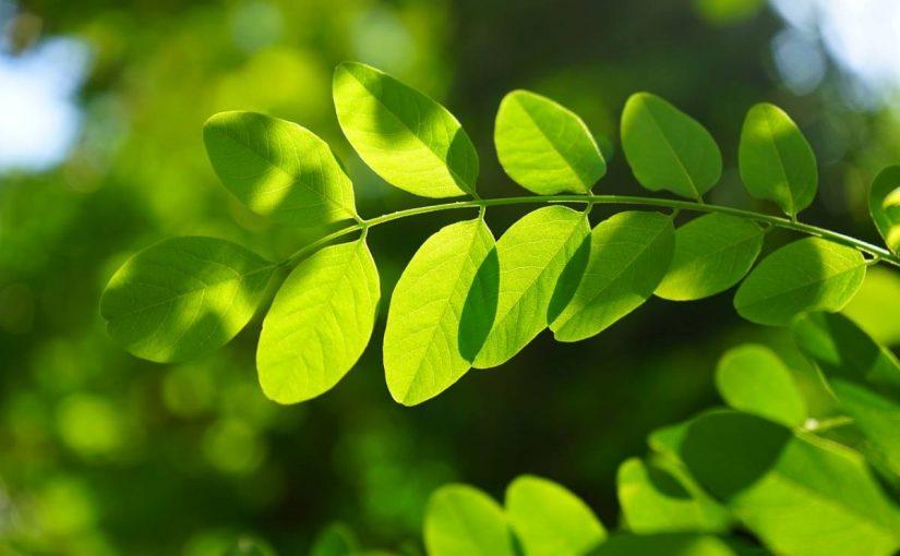 Décorer son jardin avec des plantes mellifères