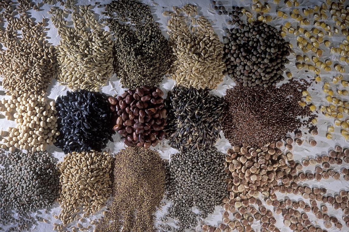 Diverses variétés de semences bio