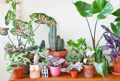 Comment acheter des plantes en ligne