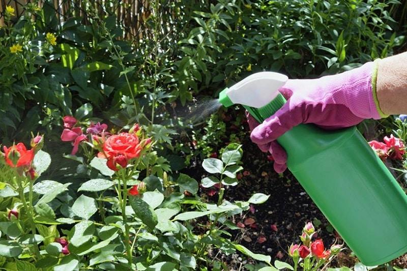 Comment bien utiliser le savon noir puceron