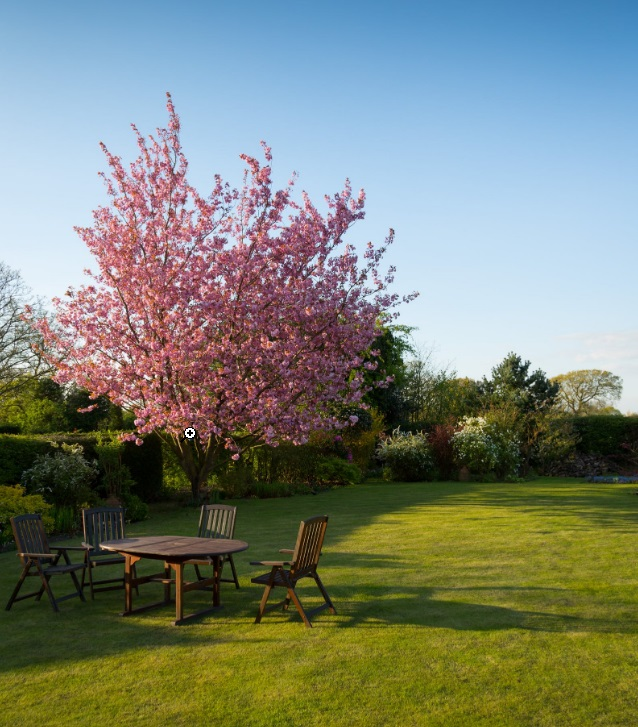 Jardin avec arbe en fleurs et table