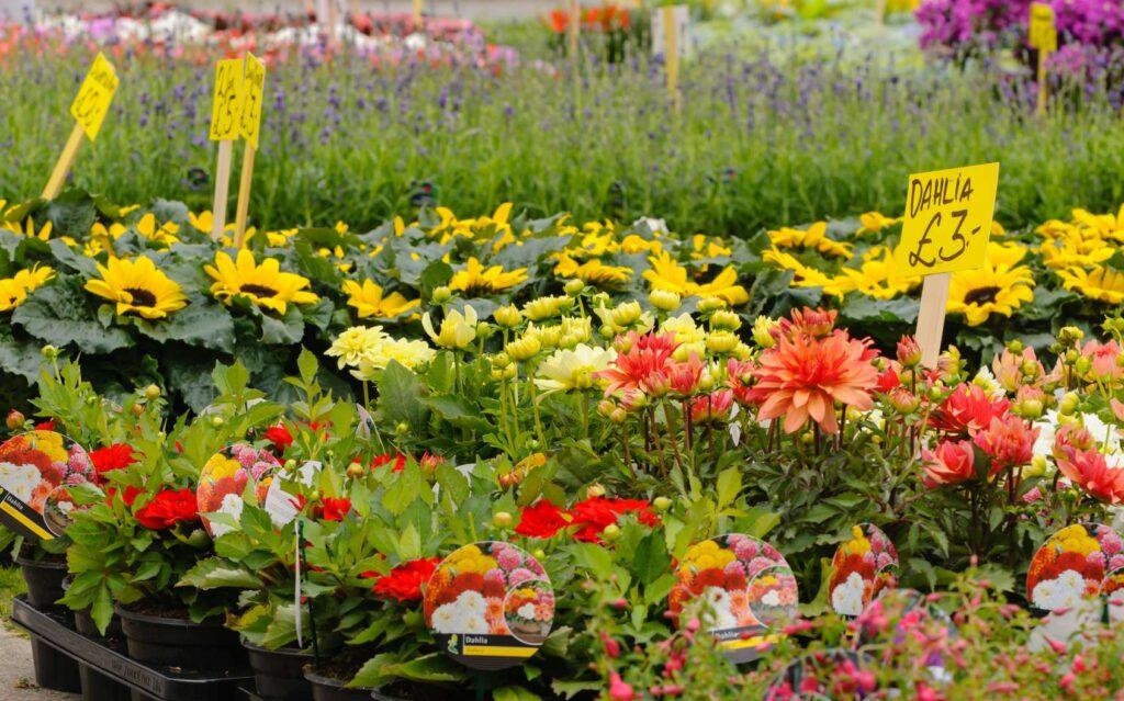 achat de fleurs en ligne