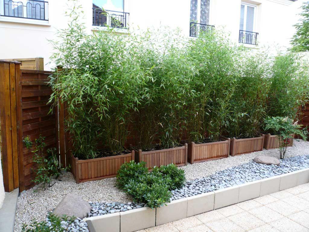 plante du bambou chez vous sans tre envahi les astuces