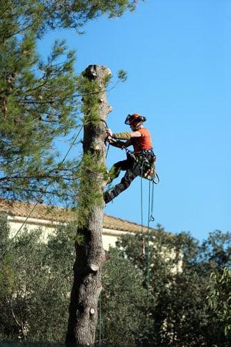 élagueur dans un arbre