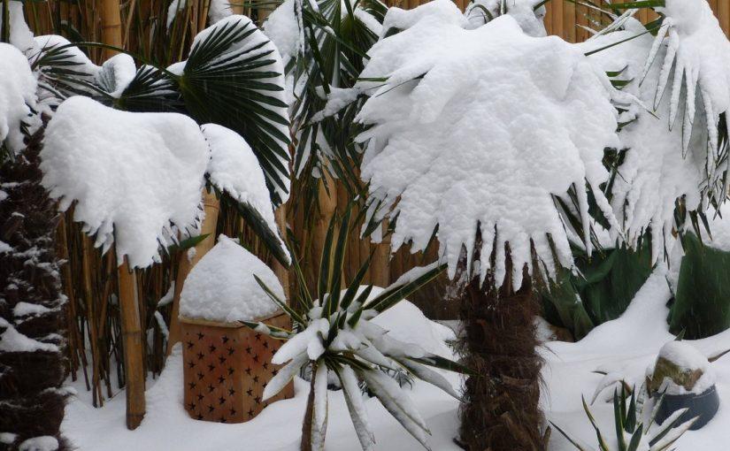 En hiver il est important de prot ger son jardin contre for Avoir une ruche dans son jardin