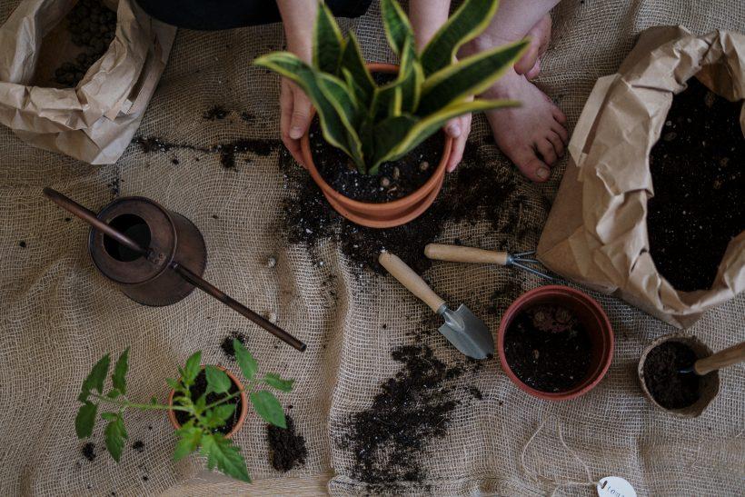 Des plants