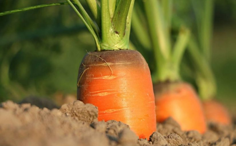 En quoi est-ce que le jardinage peut-il vous faire du bien?