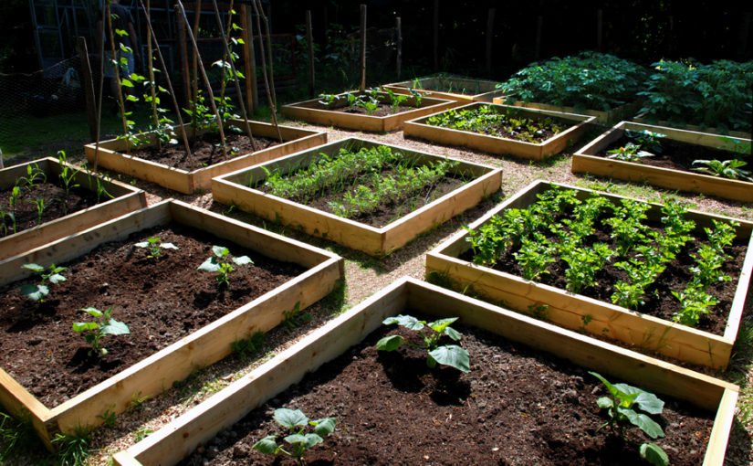 potager carre