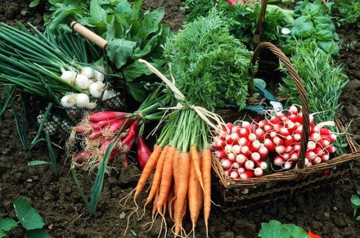 Jardin que planter et semer en avril le jardineur - Que semer en octobre ...